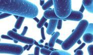 益生菌适合什么人群 什么是益生菌